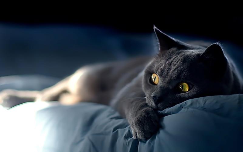 Медицинские проблемы. (Может, кошка заболела. А может ей грустно?)