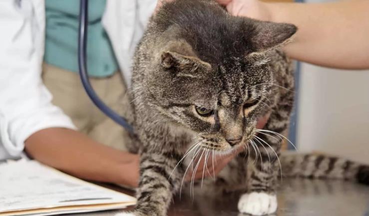Подробный список болезней кошек с лечением
