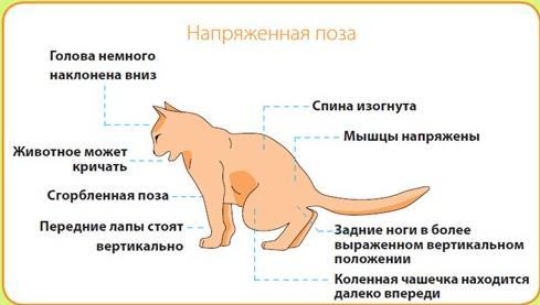Мочекаменная болезнь у кошки лечение