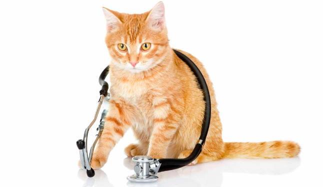 ветеринарный врач в Зеленограде